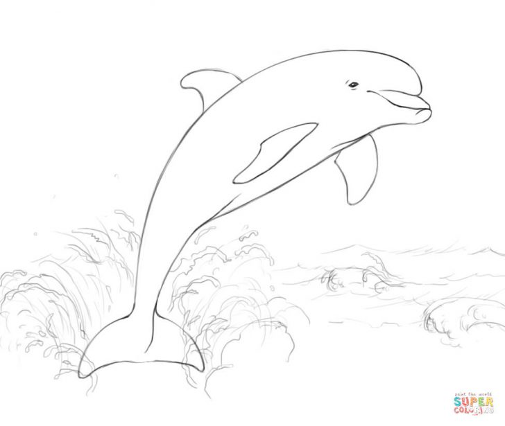 728x615 Printable Dolphin Coloring Pages For Kids Animal Place Picture