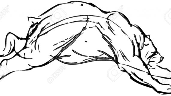 570x320 Simple Bear Drawing Simple Drawing Of A Bear With Vector Effect