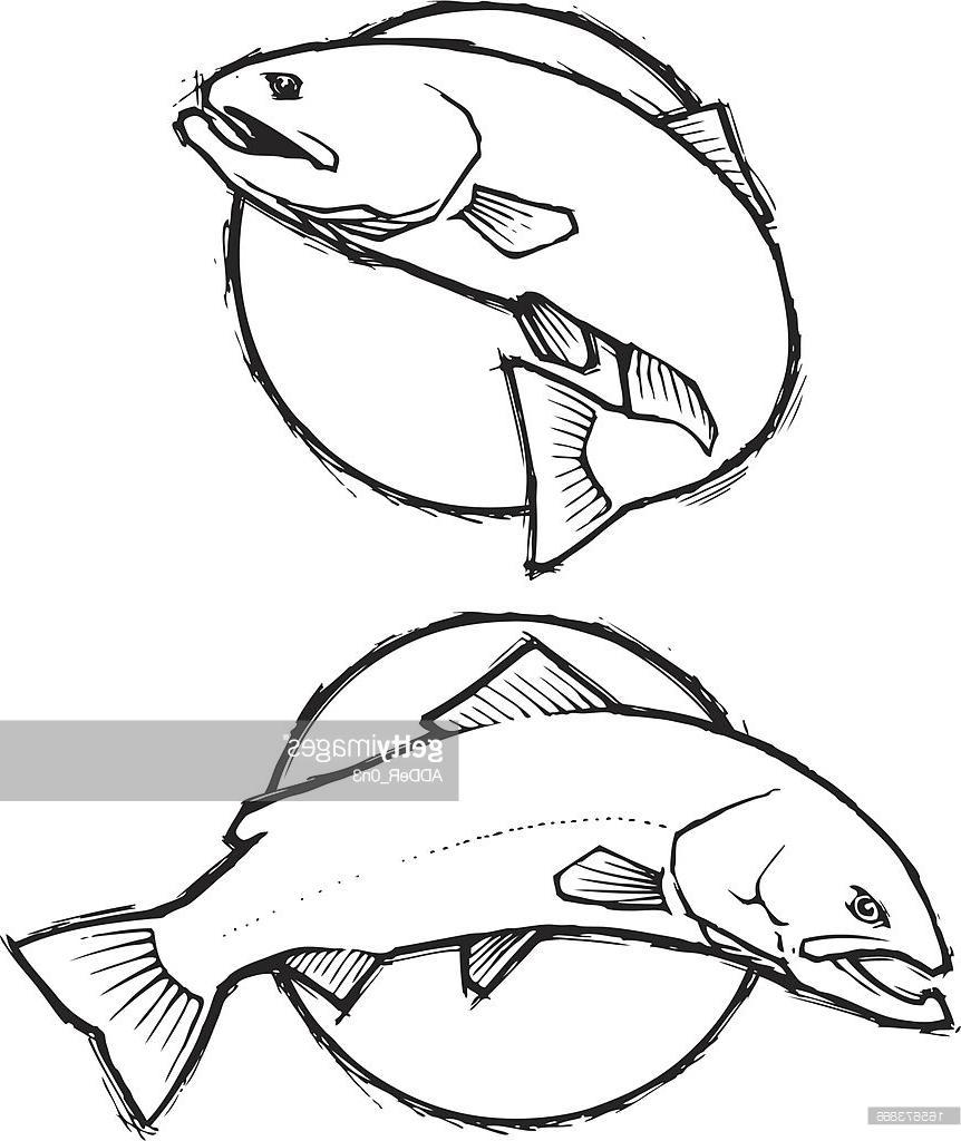 862x1024 Trout Sketch Simple Vector