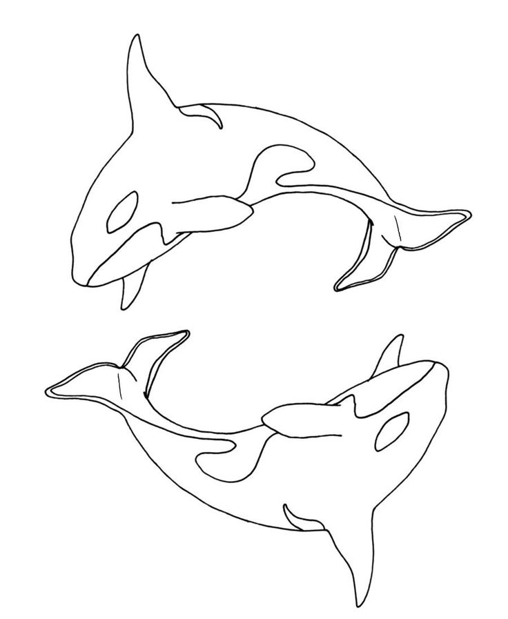 736x897 69 Best Dolphins Images On Dolphins, Common Dolphin