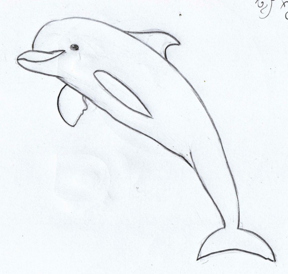 Dolphin Step By Step Drawing At GetDrawings