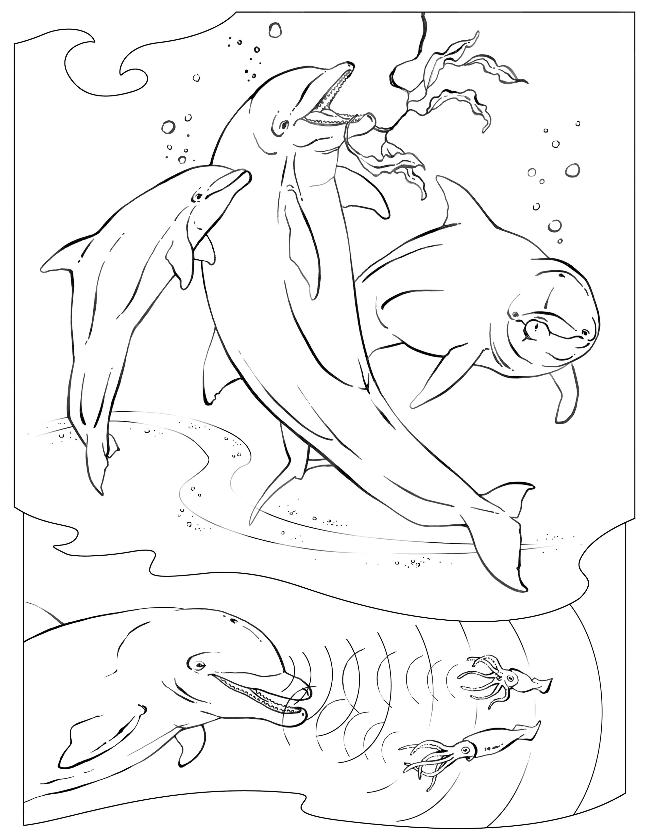 Dolphins Drawing Pictures at GetDrawings.com   Free for personal use ...
