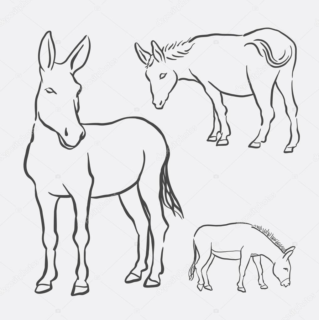 1018x1024 Donkey Pet Mammal Animal Line Art Drawing Stock Vector