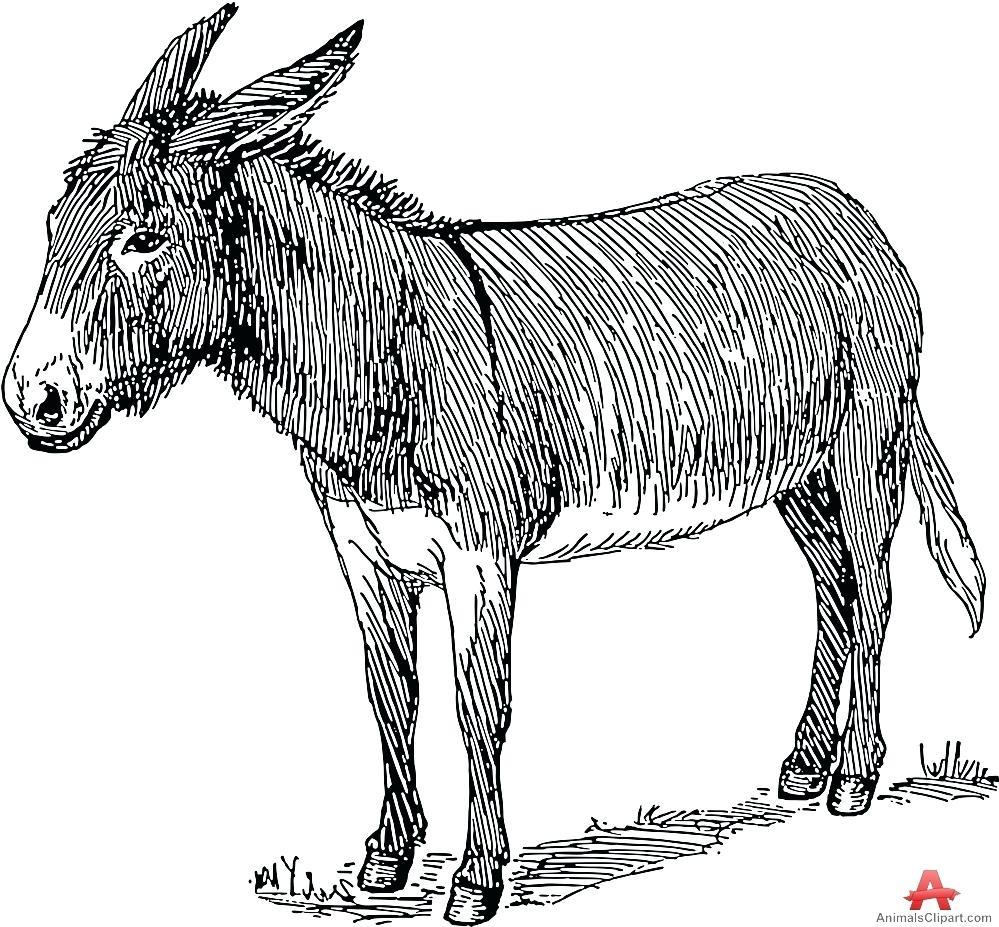 999x927 Diagram Zebra Skeleton Diagram Donkey 7. Zebra Skeleton Diagram