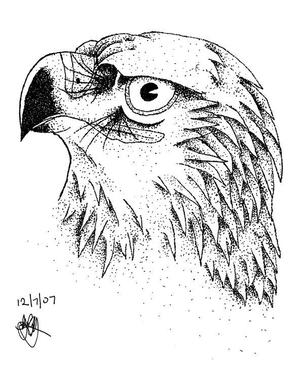 600x762 Eagle Portrait