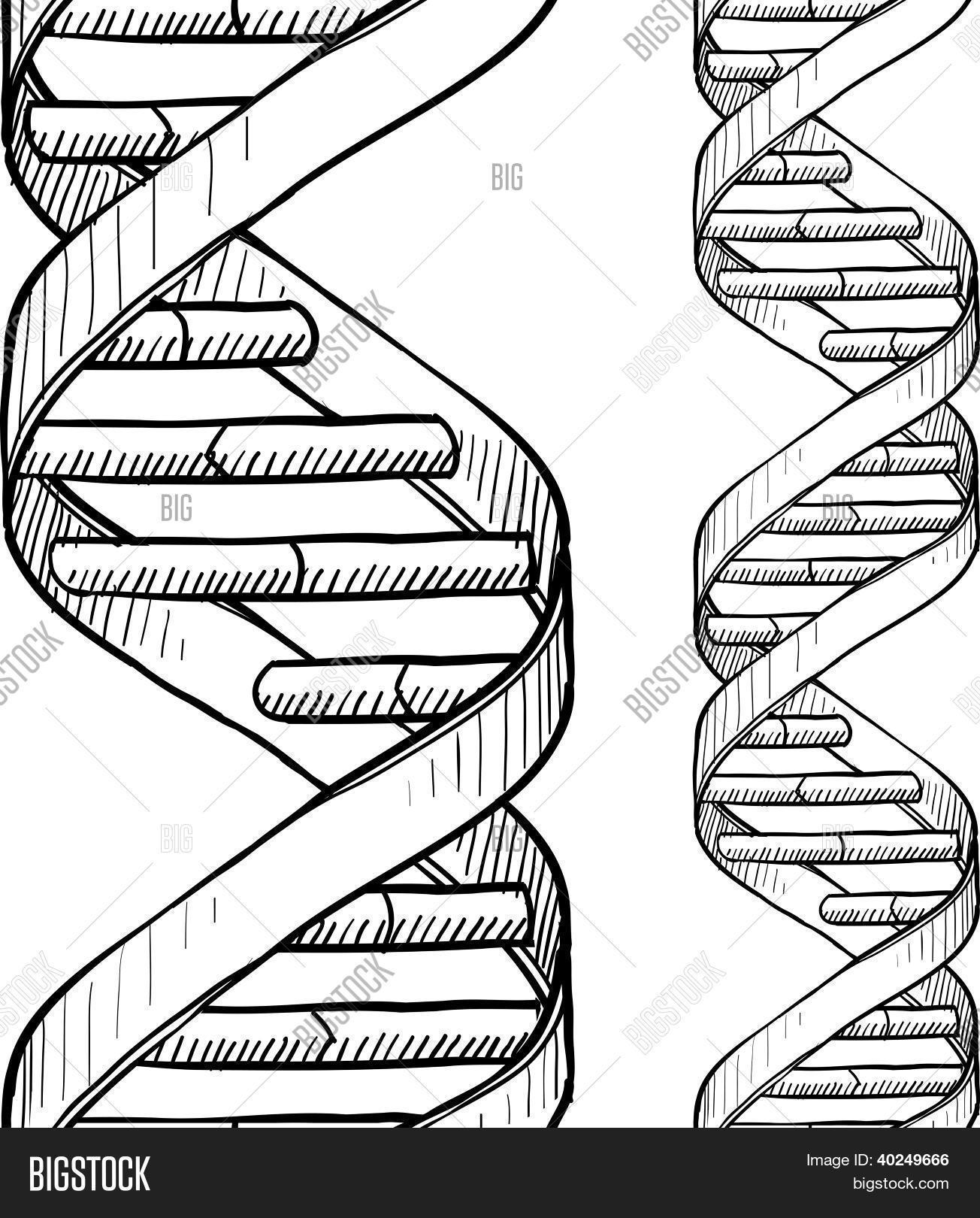 1304x1620 Seamless Dna Double Helix Vector Amp Photo Bigstock