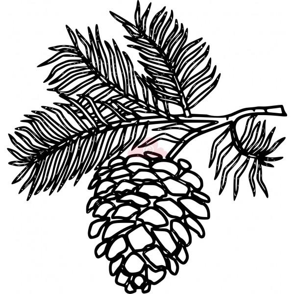 600x600 White Pine Cone Drawing Clip Art Pine Cone Clipart Panda