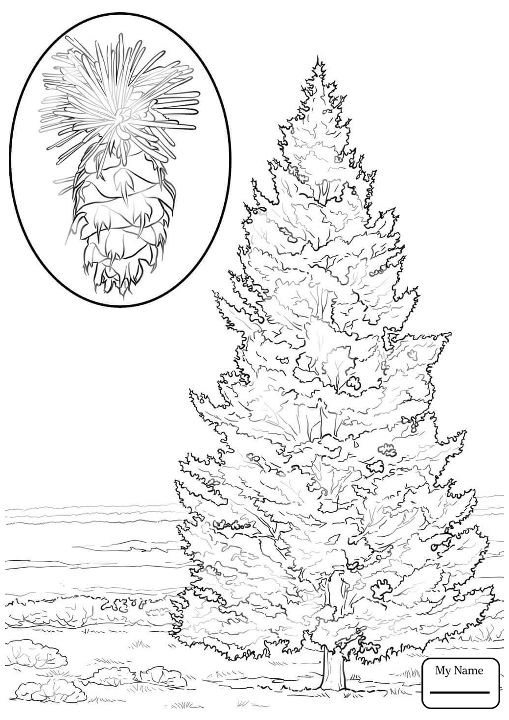 1040x1469 Coloring Pages For Kids Trees Leaves Fir Tree Douglas Fir