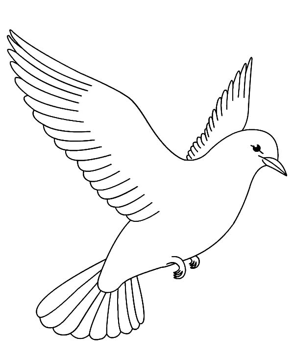 600x731 bird coloring pages for kids printable me dove page - Coloring Pictures Of Birds