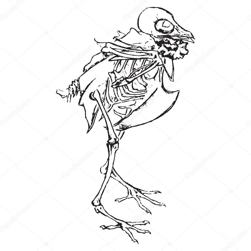 1024x1024 Monochrome Skeleton Of Pigeon Dove Bird Sketch Vector Stock