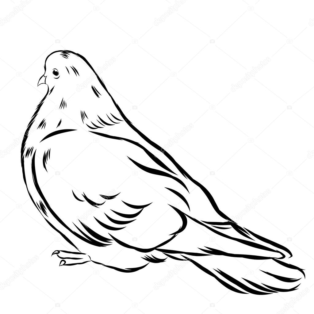 1024x1024 Romantic Grace White Dove Isolated On Background. Ink Drawn Icon