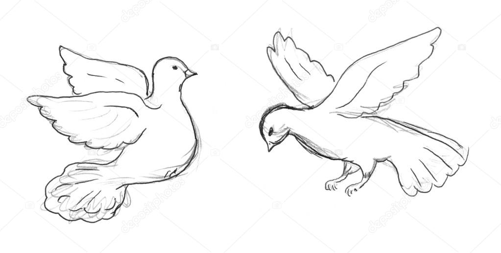 1023x516 Two Dove Sketch Stock Photo Nadyaus