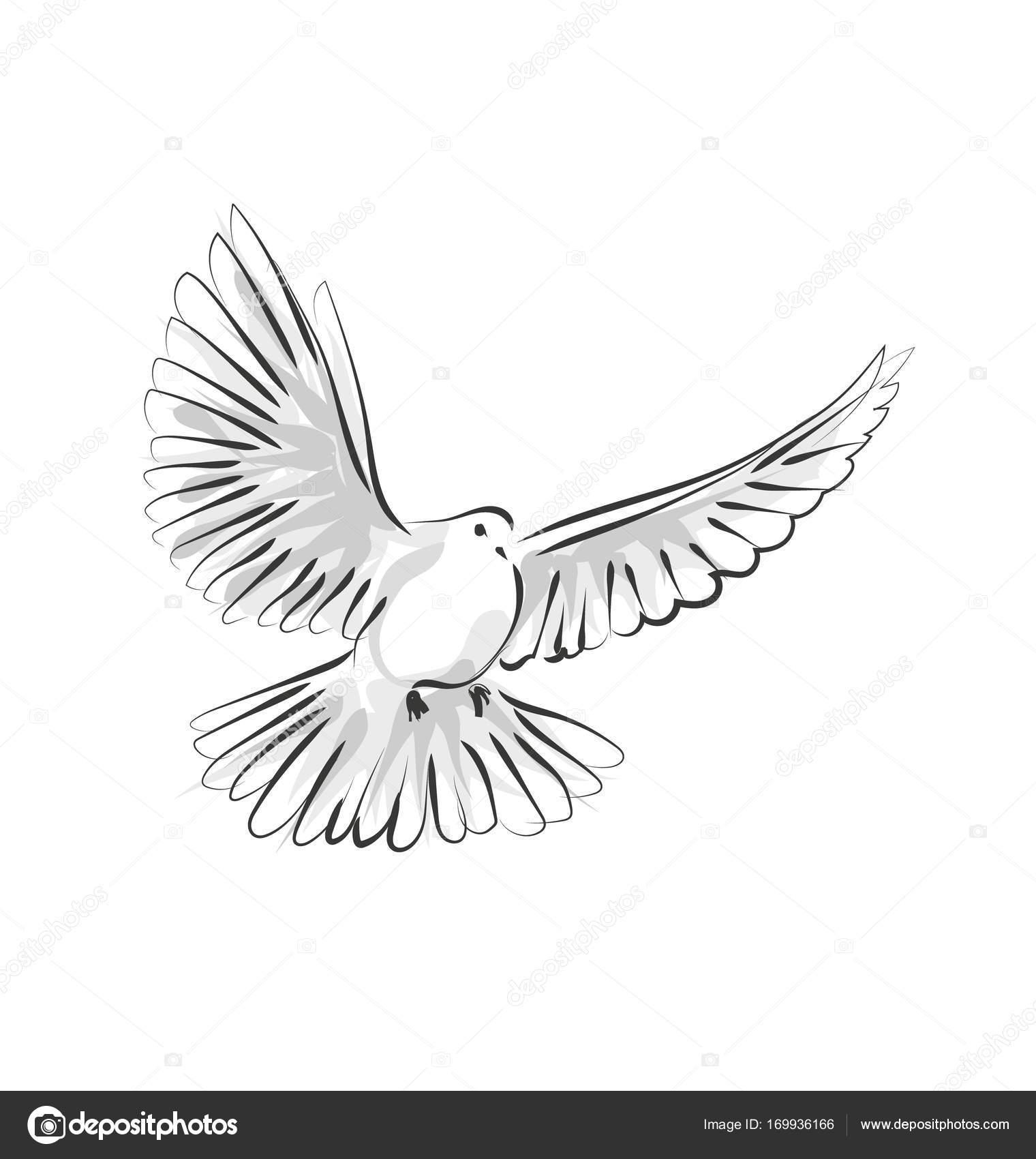 1520x1700 Vector Line Sketch Dove Stock Vector Onot