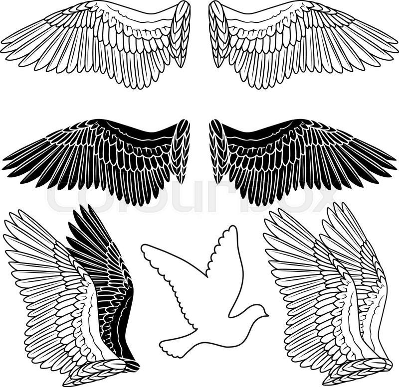 800x777 Dove Wing Dove Vs. Crow