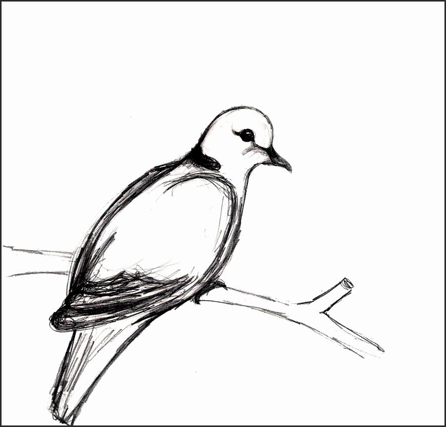 871x835 Easy Dove Drawing Fftza Elegant How Draw A Dove Dove How