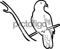 200x162 Hand Drawn Icon From Pictofigo For Jambu Fruit Dove