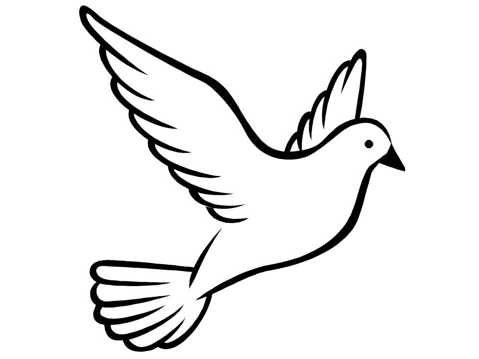 960x720 Drawn Dove Flying Pigeon