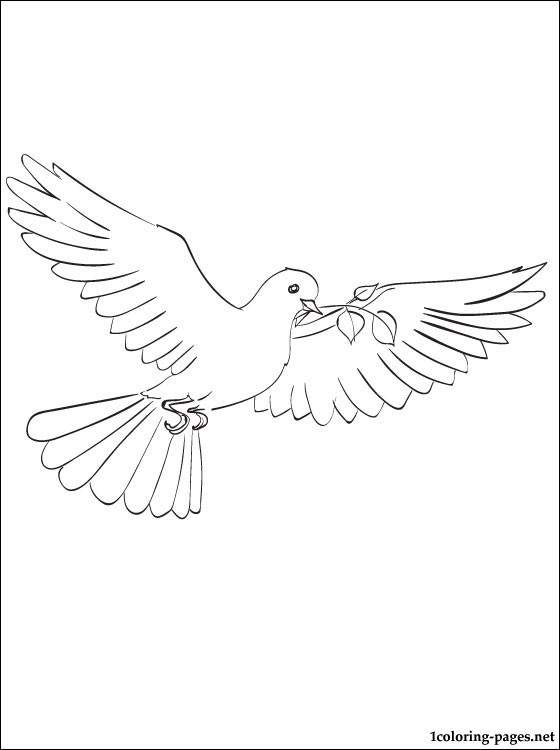 560x750 Free Dove Line Drawing Coloring Pages