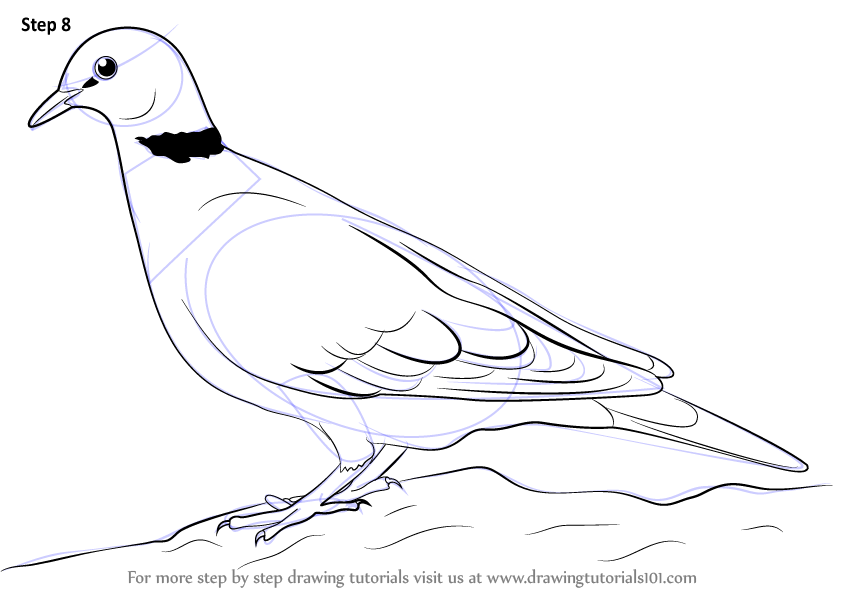 844x598 Learn How To Draw A Dove (Birds) Step By Step Drawing Tutorials