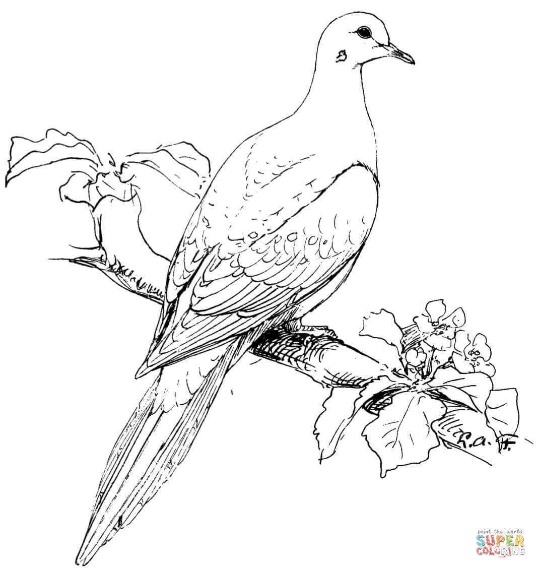 1064x1127 Perched Mourning Dove Coloring Page Free Printable Coloring Pages