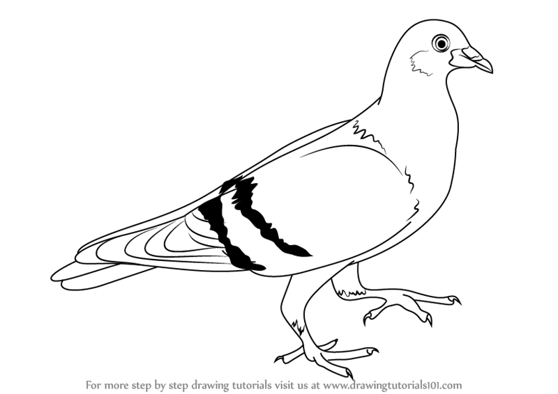 800x566 Pigeon Outline Drawing Dove Free Images At Clker Vector Clip Art