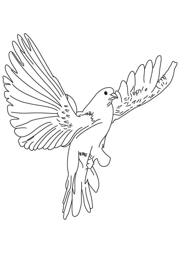 613x860 Realistic Dove Coloring Pages For Kids Learn To Color Birds How