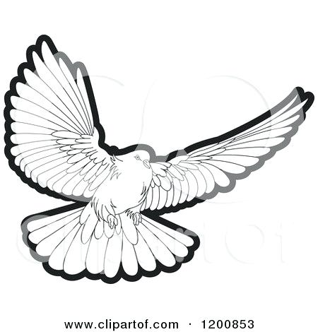 dove drawing outline at getdrawings com free for personal use dove rh getdrawings com dove clipart black and white dove clipart with olive branch free