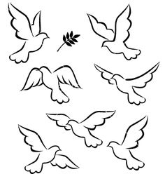 Dove Flying Drawing