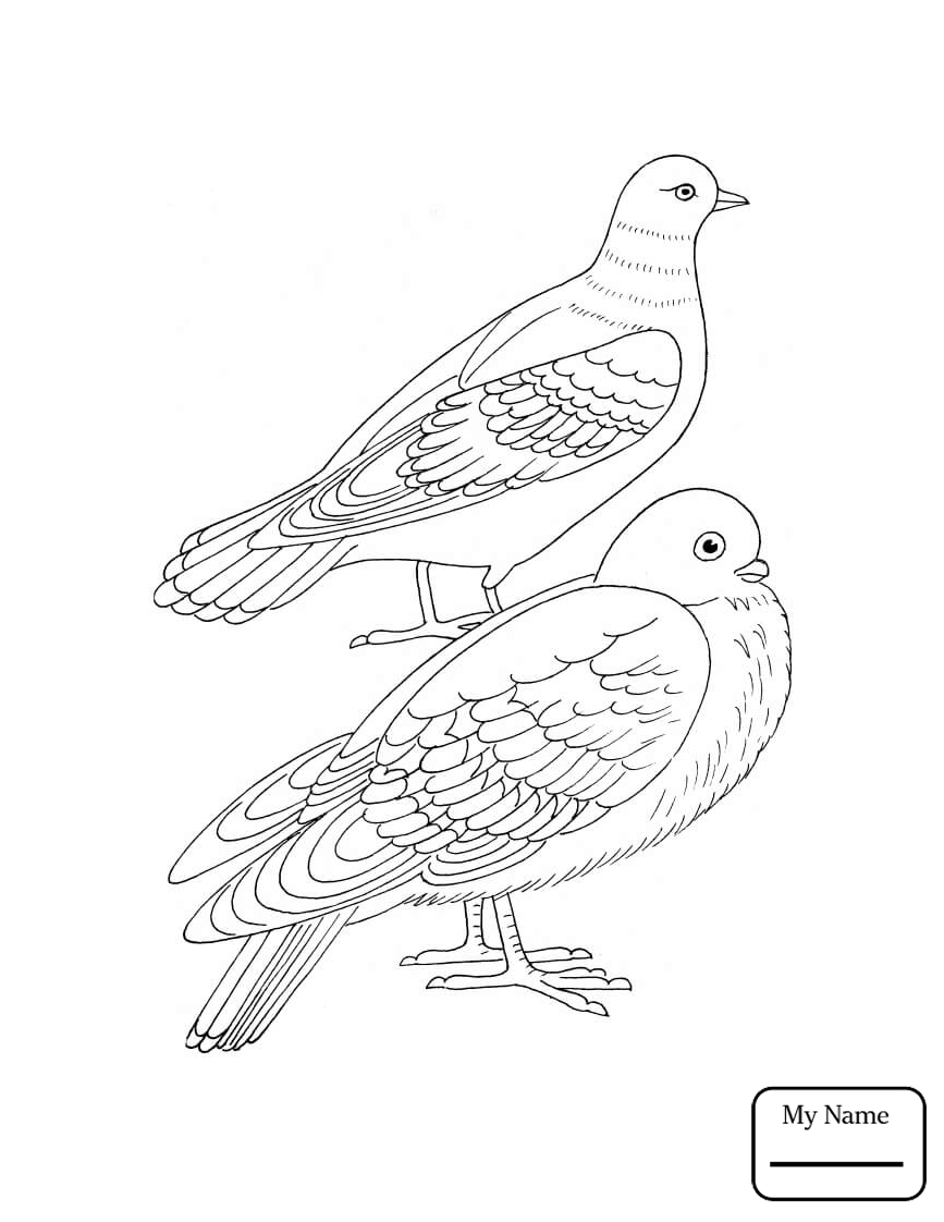 Dove Flying Drawing at GetDrawingscom Free for personal use Dove