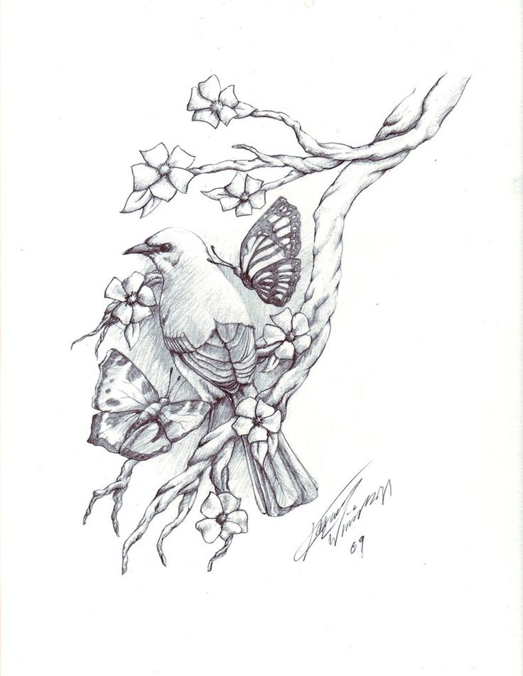 Doves Drawing