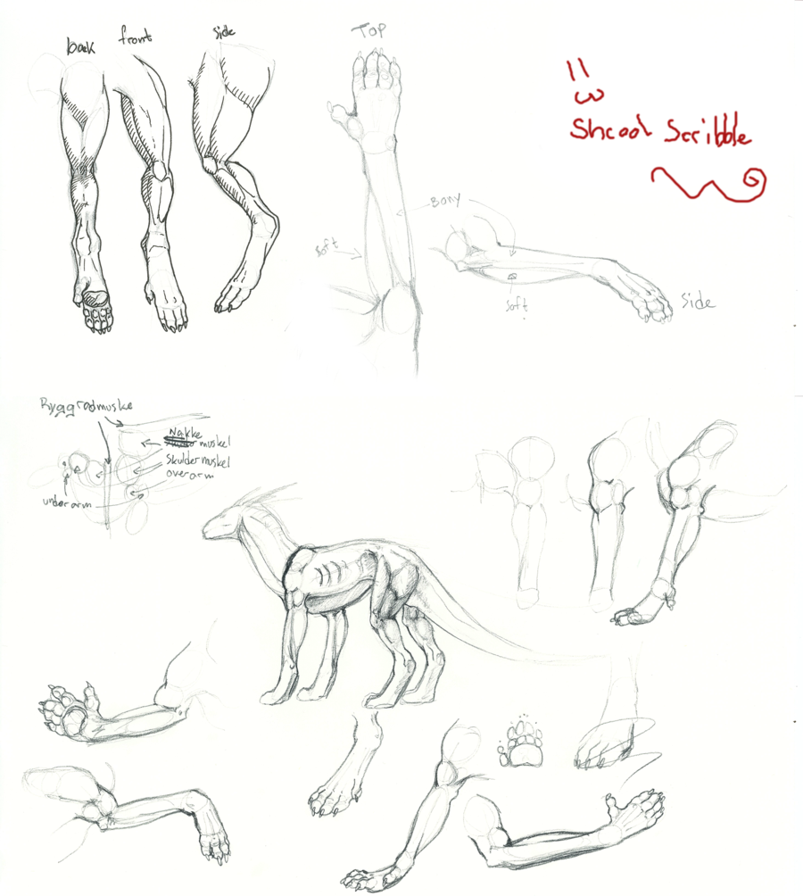 900x1004 Dragon Anatomy By Elen89
