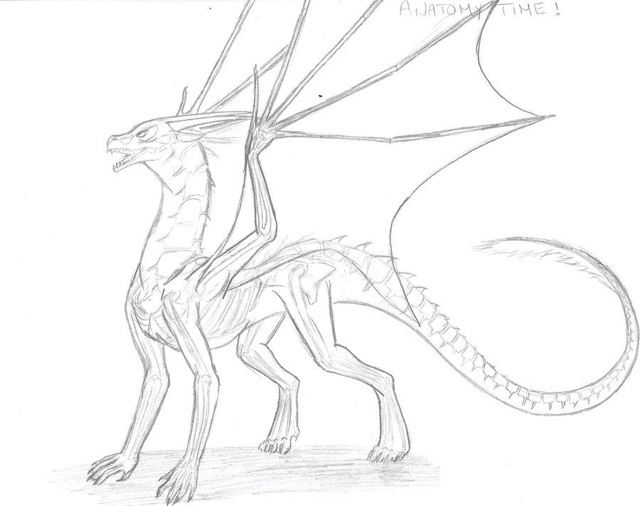 900x711 Skeleton Dragon And Anatomy By Spellcheck 15