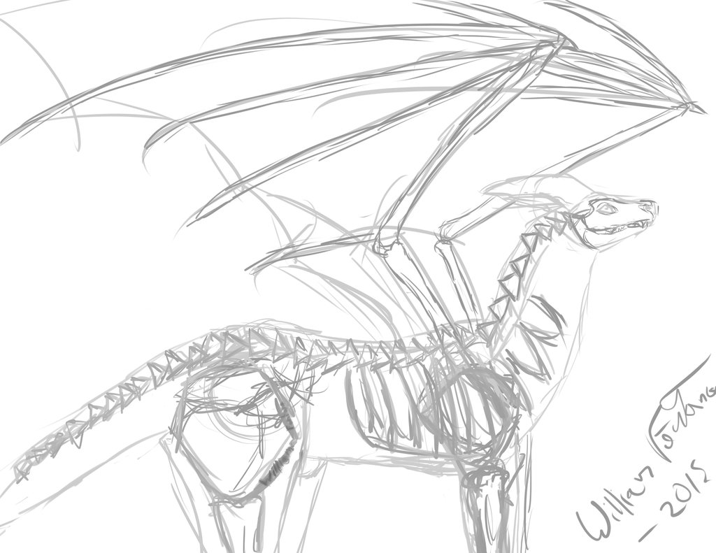 1024x791 Theoretical Dragon Anatomy According To Me By Willplay1a