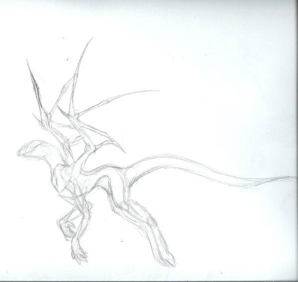 600x568 Dragon Anatomy By Drakin09