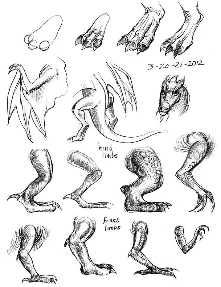 717x930 Dragon Legs, Wings, Arms, Body Parts How To Draw Mangaanime