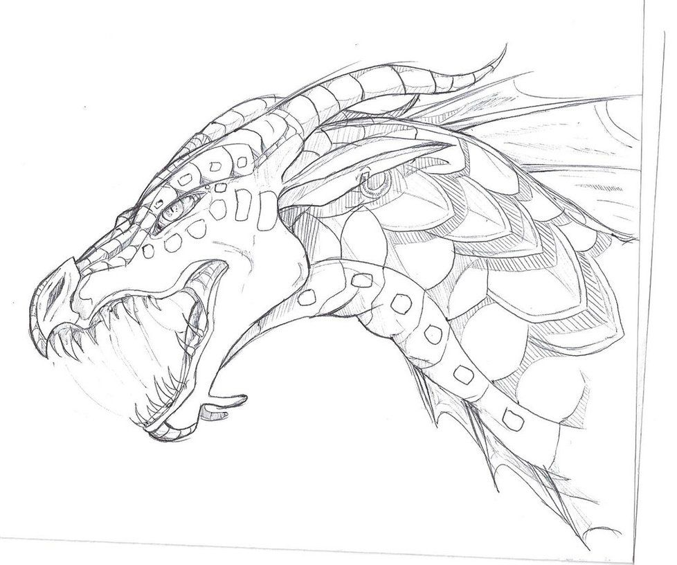 978x816 Seawing Sketch By