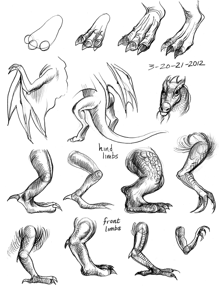 717x930 How To Draw Dragon Legs Arms And Talons Step 7 Dragons