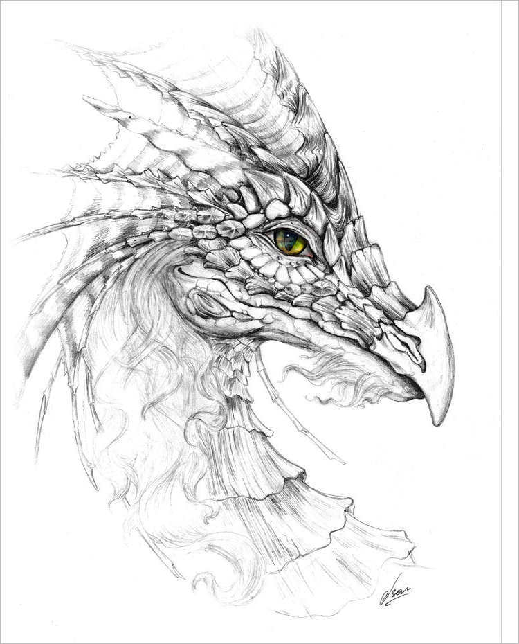 750x930 Dragon Pencil Drawing Sketches Free Amp Premium Templates