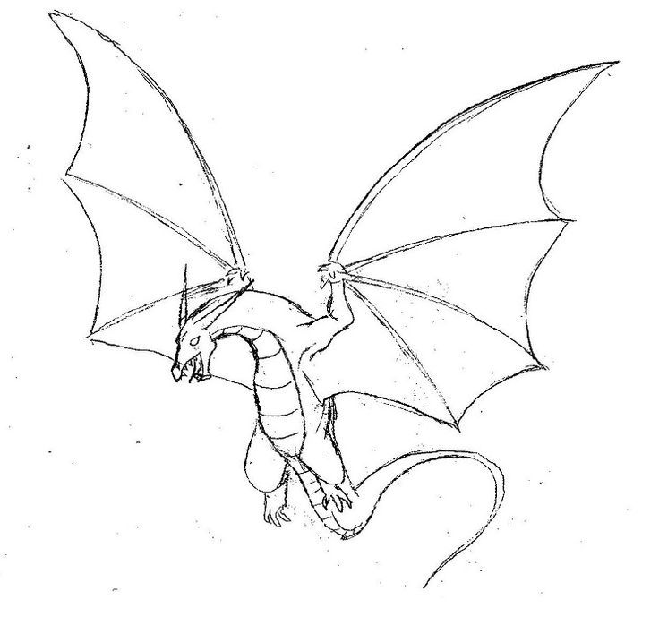 736x708 Pictures Dragon Sketch Easy