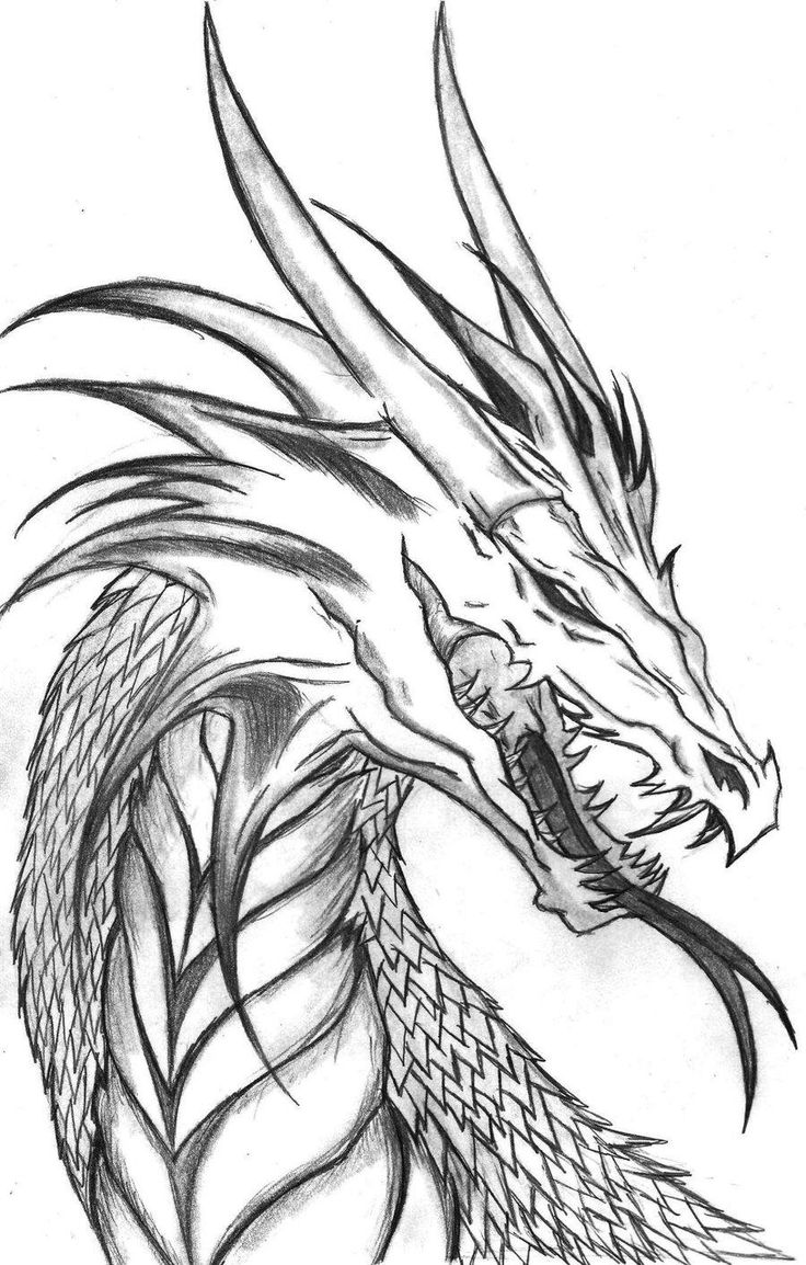 736x1154 Dragon Drawing Tutorial To Realistic Coloring Pages