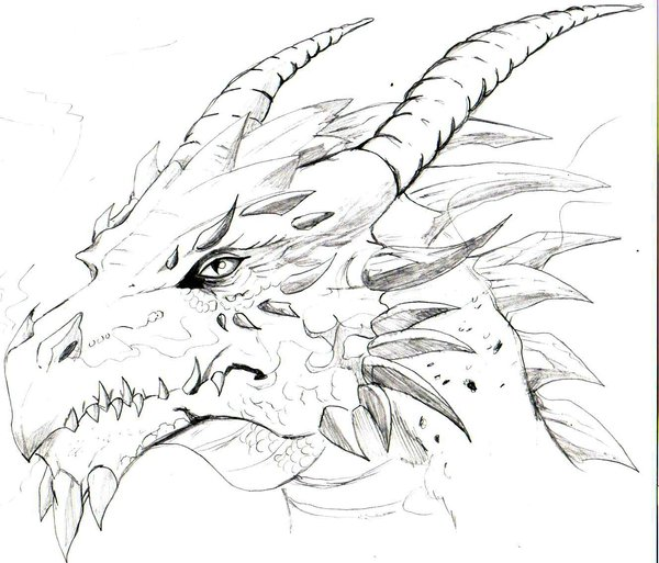 600x513 Sketches Of Dragons my 1st dragon sketch trunks24 on deviantart