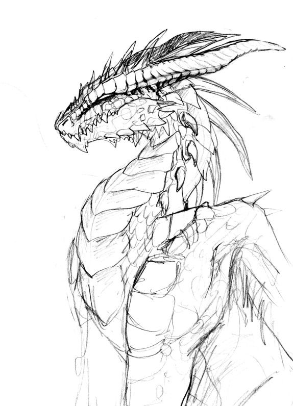 574x796 Dragon Sketches