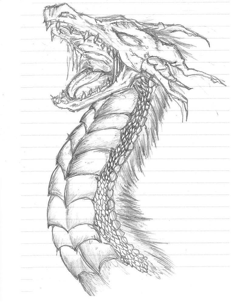 803x994 Dragon Sketches In Pencil Dragon Sketch 1 By ~evilcupcake696