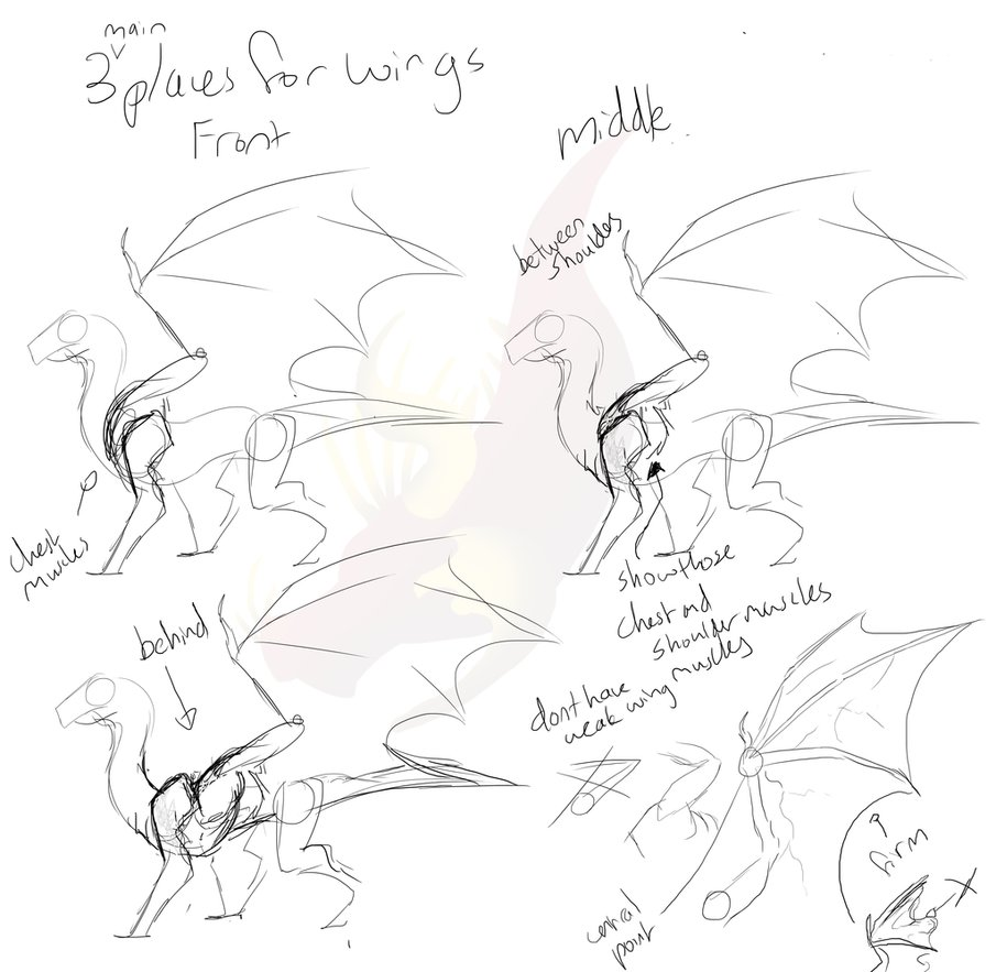 905x883 Sketchy Dragon Wing Placement Tutorial By Pteradragon
