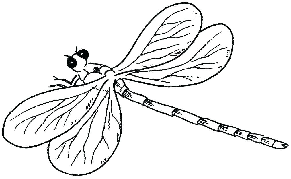 1015x624 Dragonfly Coloring Pictures Dragonfly Coloring Page Preschool
