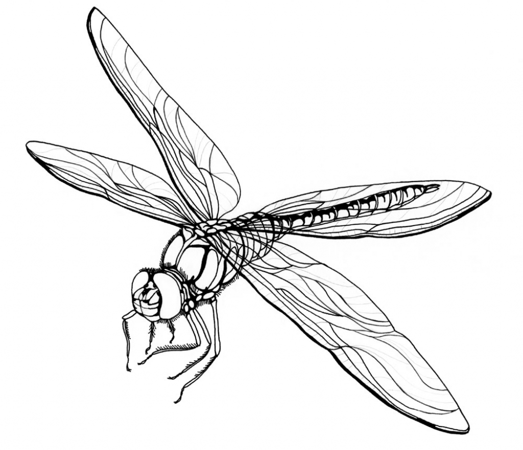1024x880 Drawing Of A Dragonfly How To Draw Dragonfly In Simple Lines