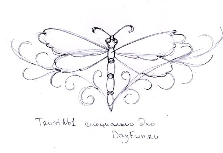 755x519 How To Draw A Dragonfly Step By Step