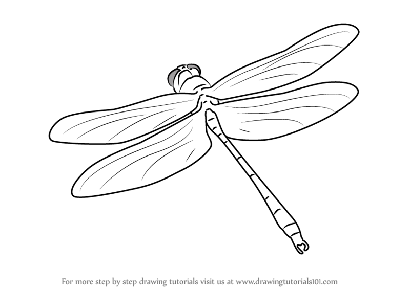 800x567 Learn How To Draw A Dragon Fly In Flight (Insects) Step By Step
