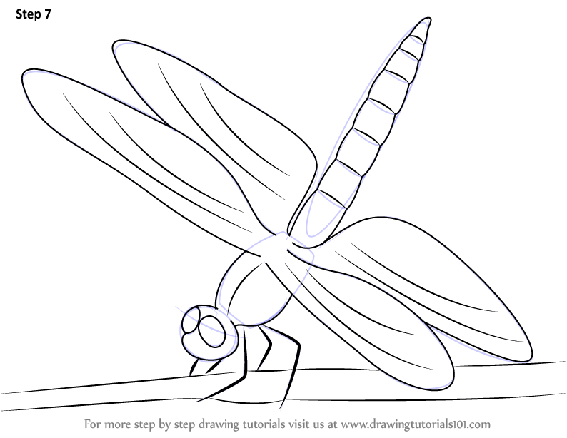 794x614 Learn How To Draw A Dragonfly (Insects) Step By Step Drawing