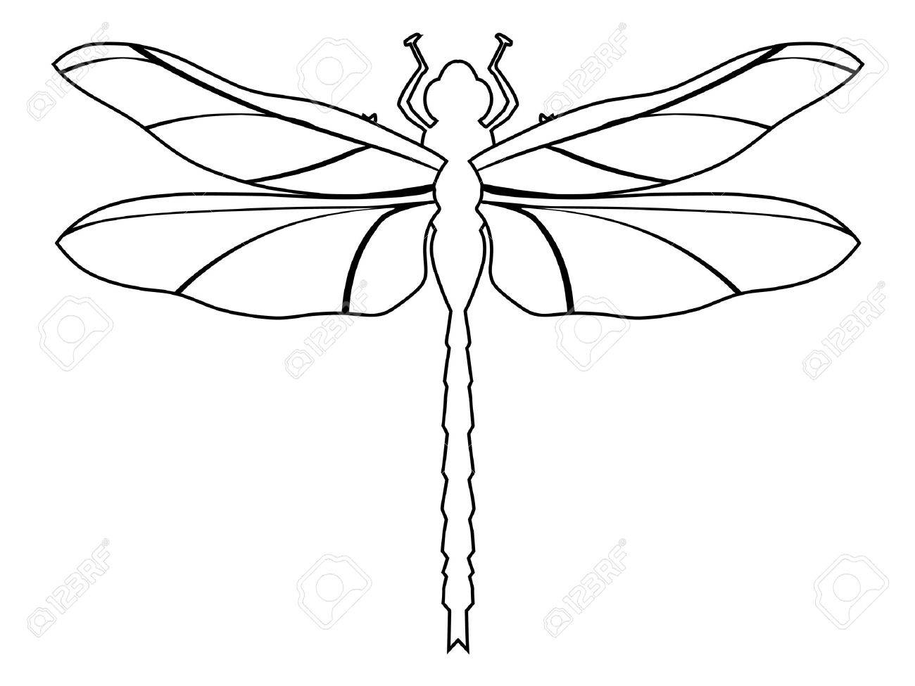 1300x975 Outline Illustration Of Dragonfly, Top View Royalty Free Cliparts